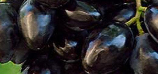 Плоды сорта Ромбик вблизи спелые созрели