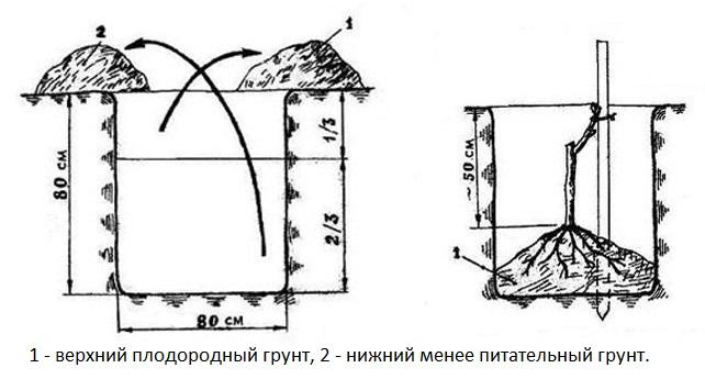 Схема посадочной лунки для саженца винограда Юбилей Новочеркасска