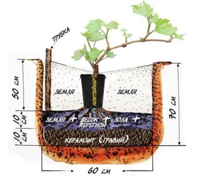 Схема обустройства посадочной ямы для саженца винограда