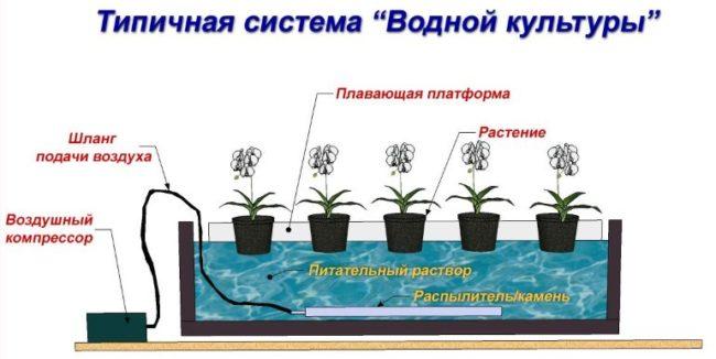 Принцип выращивания растений по технологии глубоководной культуры