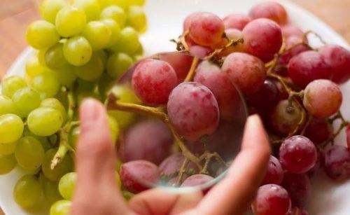 Спелые ягода красного и зеленого винограда без признаков загнивания