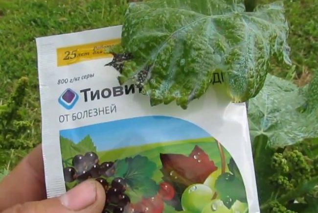 Биологический препарат Тиовит для профилактики и лечения заболеваний винограда