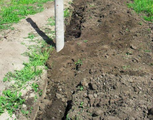 Подготовка посадочной траншеи для саженцев винограда в осенний период