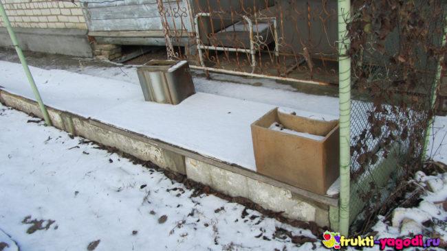 Укрытие винограда старой дверью и снег