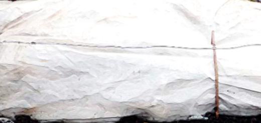 Виноград укрытый на зиму плотной тканью не плёнка