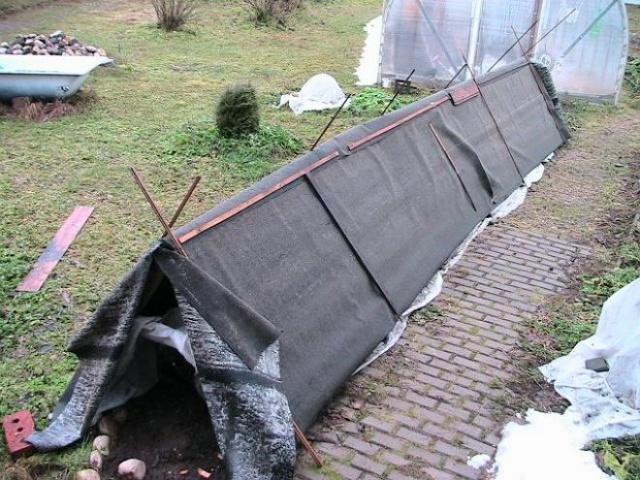 Укрытие из рубероида на деревянном каркасе для виноградной лозы в условиях холодного Севера