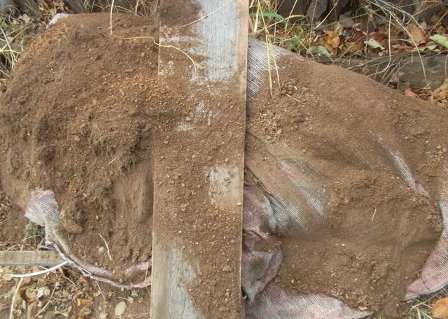 Зимнее укрытие куста крыжовника мешковиной и грунтом в условиях Забайкалья