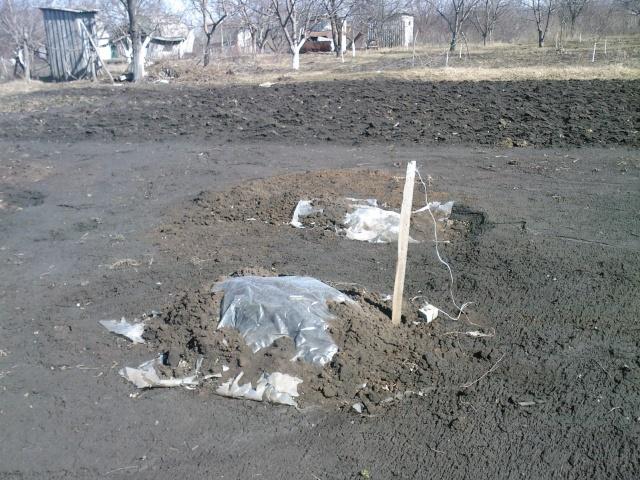 Использование полиэтиленовой пленки для зимнего укрытия молодых кустов винограда