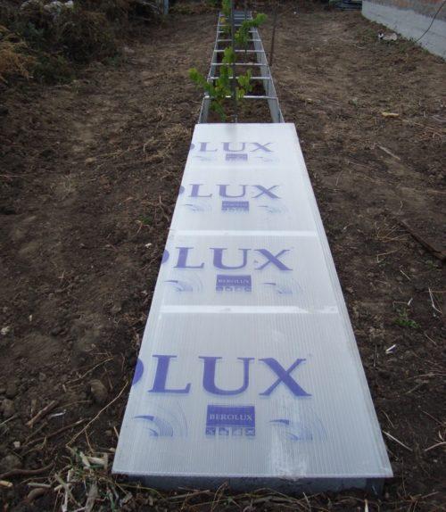 Зимнее укрытие виноградной лозы в стационарных коробах из поликарбоната
