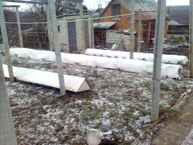 Зимнее укрытие винограда и хозяйственные постройки на дальнем плане