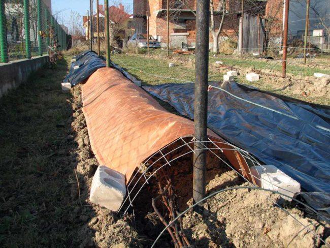 Укрытие на зиму для виноградной лозы из кладочной сетки и рулонного материала