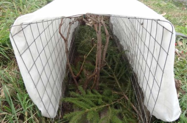 Зимнее укрытие для виноградной лозы из белого спанбонда на металлической сетке