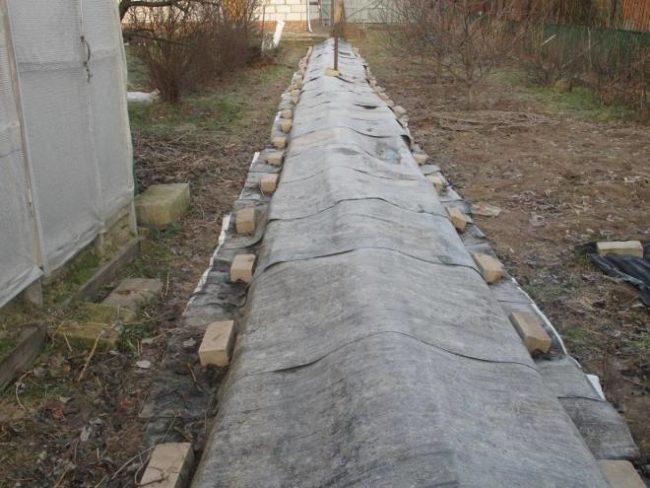 Укрытие виноградной лозы на зиму под рубероид в центральной части России