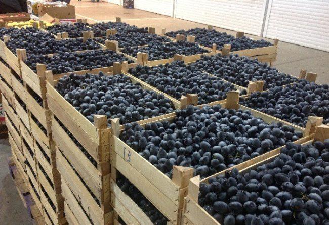 Деревянные ящики в несколько рядов и спелая ягода винограда в них