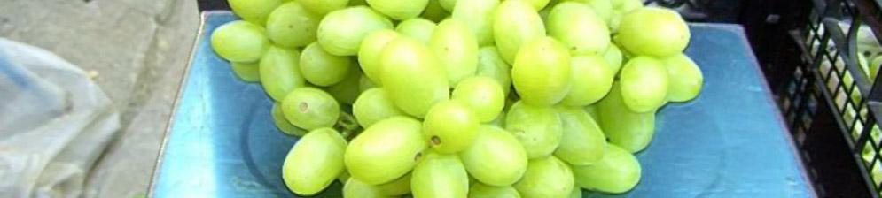 Спелые плоды виноград Ландыш вблизи