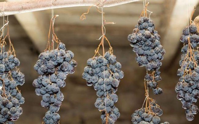 Виноградные кисти в погребе, подвешенные на хорошо натянутой веревке