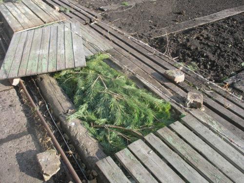 Самодельный деревянный короб для зимнего укрытия виноградной лозы