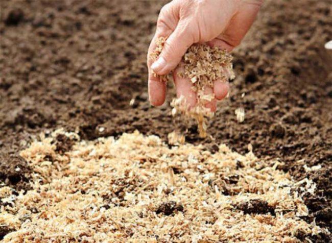Человек мульчирует почву опилками