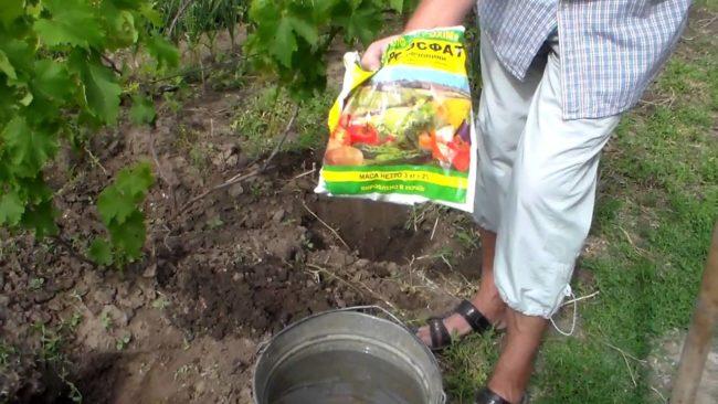 Калийно-фосфорное удобрение для подкормки винограда в пакете