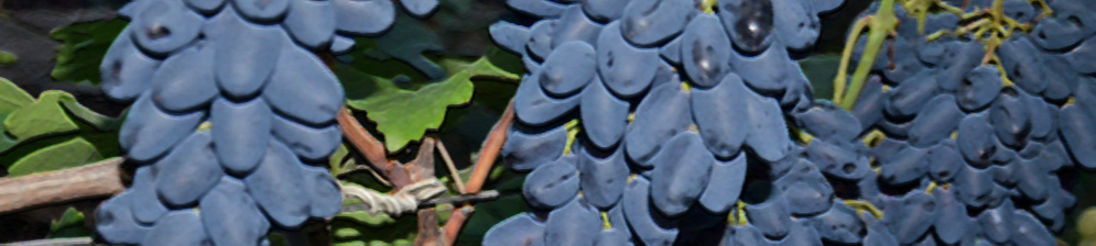 Спелые плоды на грозди винограда сорта Академик