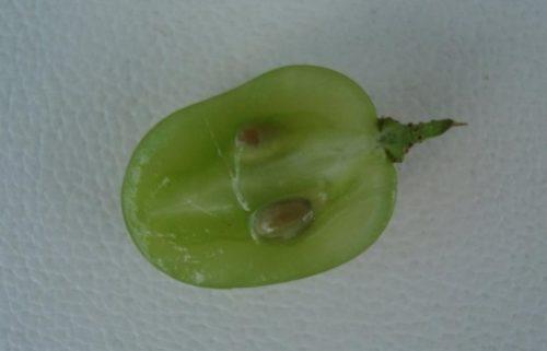 Разрезанная половинка ягоды сорта Августин с двумя семечками