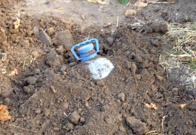 Пластиковая бутылка, закопанная над саженцем винограда для успешной зимовки