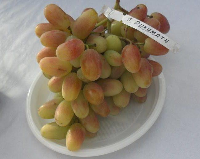 Гроздь винограда столового сорта Потомок Ризаната с биркой на белой тарелке