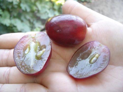 Две половинки разрезанной ягоды винограда сорта Эверест