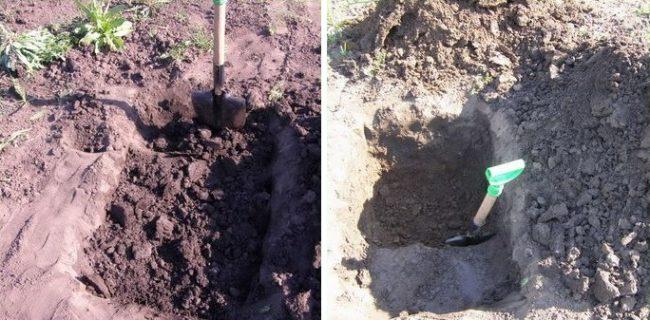 Выкапывание посадочной ямы для саженца плодового винограда