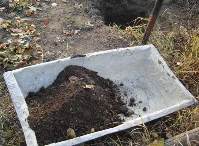 Старое оцинкованное корыто с плодородной посадочной смесью для винограда