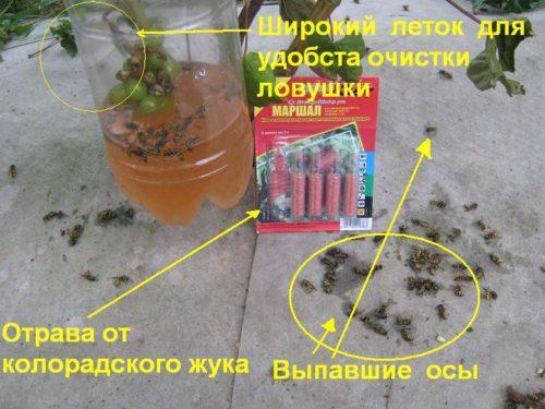 Самодельная ловушка для ос из пластиковой бутылки