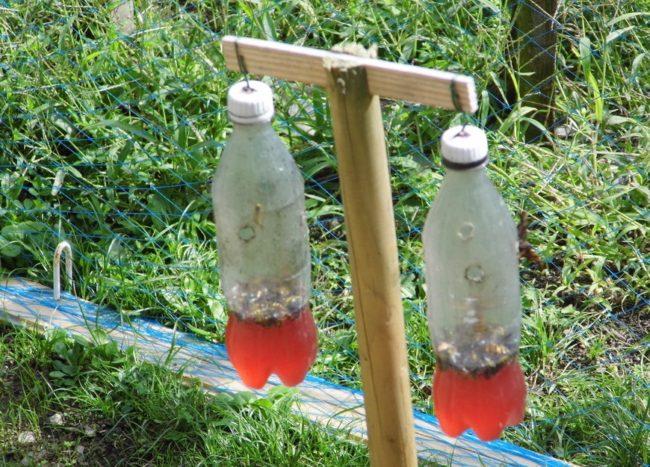 Самодельная ловушка для ос из пластиковых бутылок с приманкой внутри