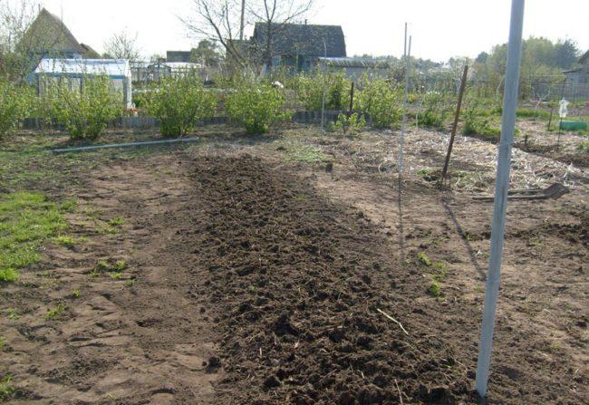 Хорошо освещаемый солнцем участок для посадки винограда на своем участке
