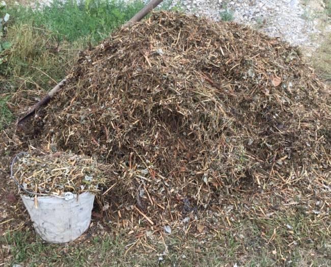 Большая куча растительных отходов для мульчирования посадок винограда