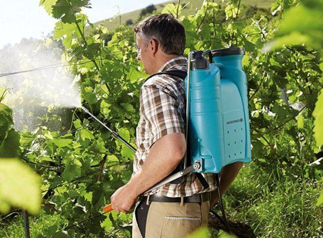 Опрыскивание винограда пульверизатором
