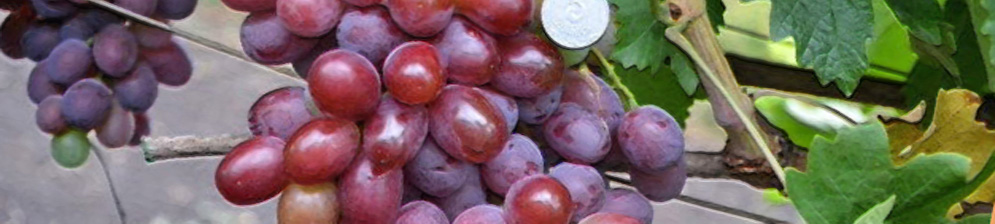 Виноград подарок Ирине спелая гроздь и монетка