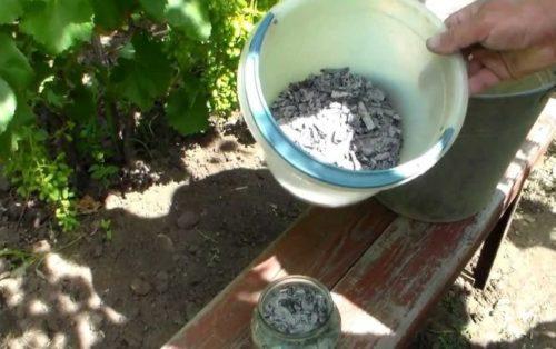 Пластиковое ведро с древесной золой для подкормки винограда