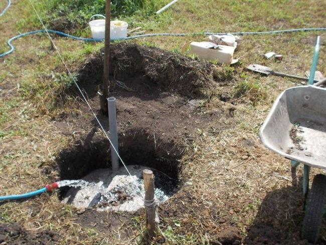 Заливка водой из шланга посадочной ямы для саженца винограда и садовая тачка