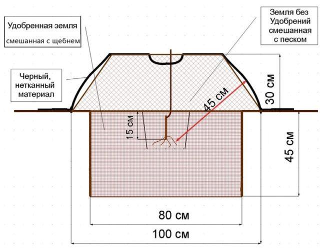 Схема ямы для осенней посадки саженца винограда в открытом грунте