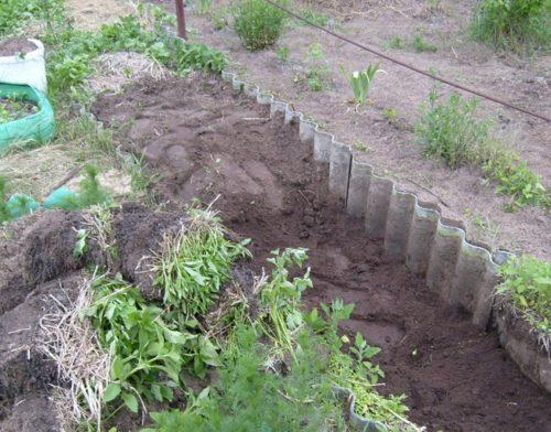Подготовка посадочной ямы для плодового винограда