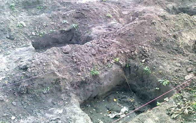 Посадочные ямы с плодородным грунтом для саженцев винограда и бечевка для разметки