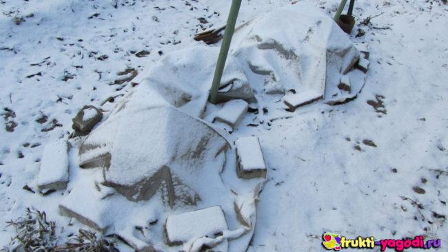 Простое укрытие винограда на зиму в снегу