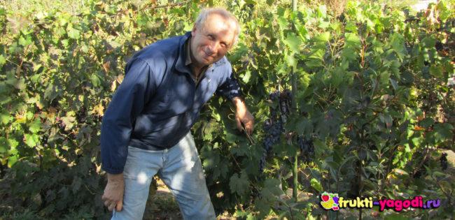 Редактор сайта Александр Кондратьевич и тёмный виноград кусты