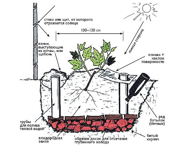 Схема посадочной ямы для плодового винограда с поливными трубами