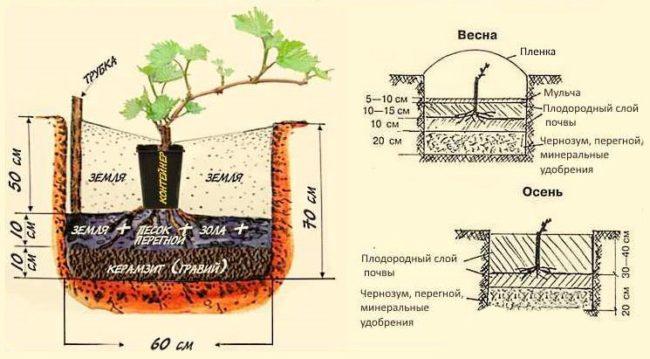 Схемы осенней и весенней посадки саженца винограда, размеры ямы и состав грунта