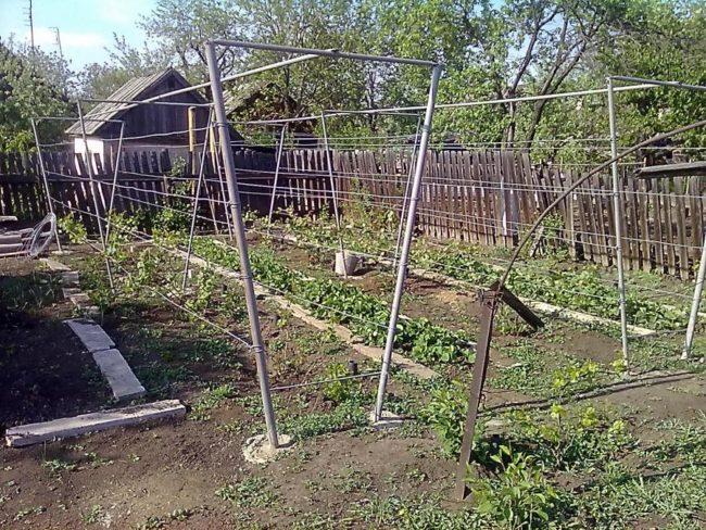 Двухсторонние шпалеры для выращивания винограда на приусадебном участке