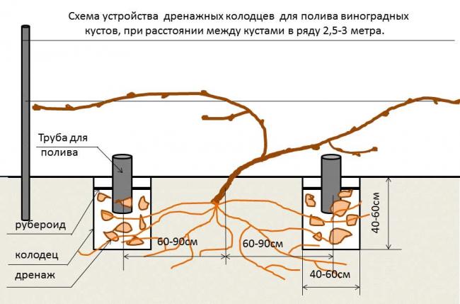Схема системы полива виноградных кустов с помощью дренажных колодцев