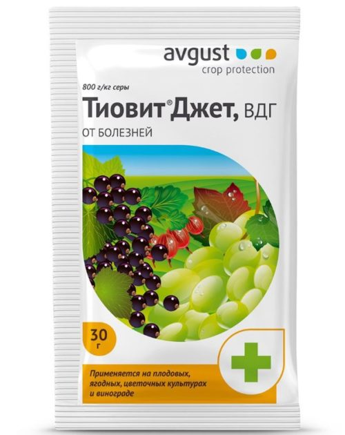Средство Тиовит Джет для защиты винограда от вредных насекомых