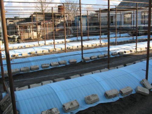 Зимнее укрытие виноградной лозы в заглубленных траншеях и столбы шпалеры