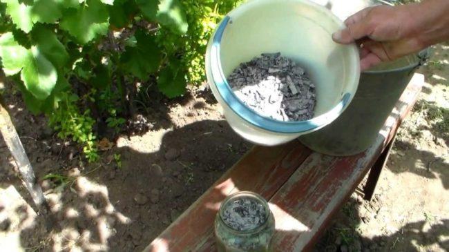 Древесная зола в ведре для удобрения винограда